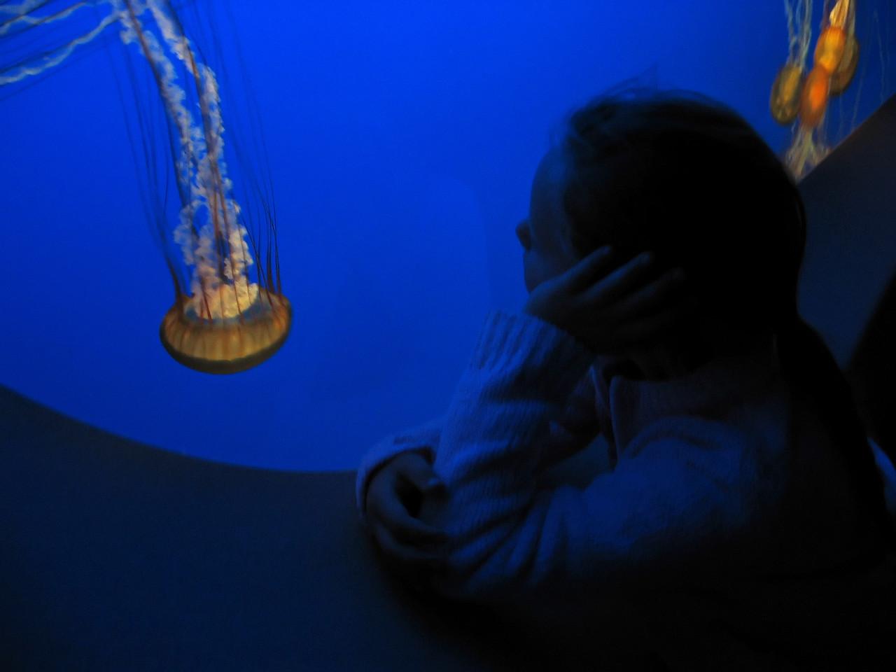 Juliet at Monterey Bay Aquarium