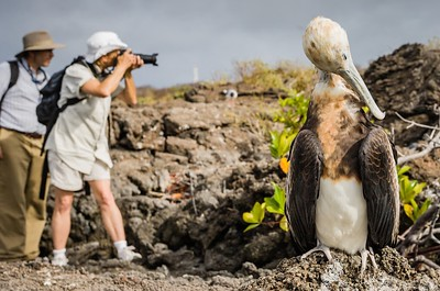 "Rare giant frigate bird, Galapagos. Winner of Google internal weekly photo contest theme ""Double Take""."
