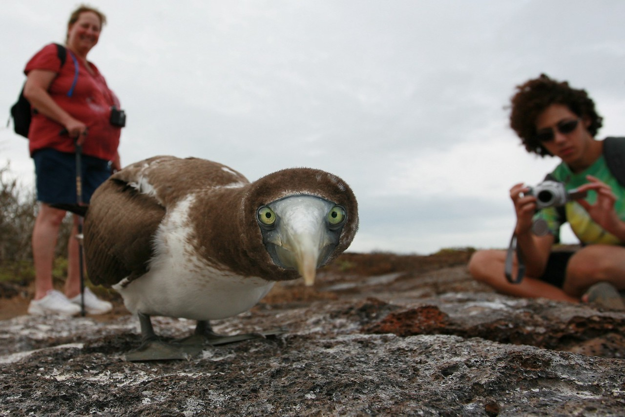 Galapagos  3376 (1)