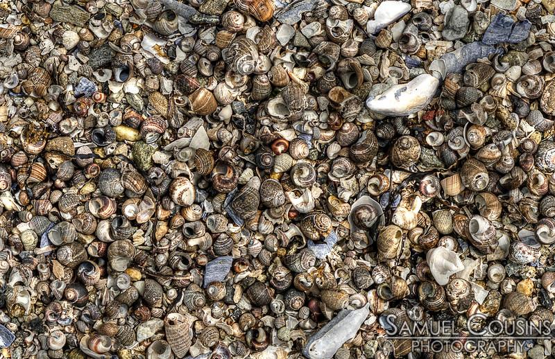 Peaks Island snail graveyard