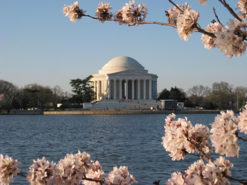 Jefferson Memorial amongst the Cherry Blossoms, Washington DC