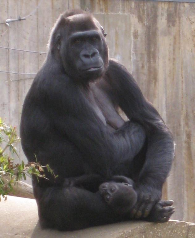Mother and Baby, National Zoo -  Washington DC