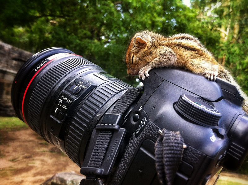And after all that studying Rob the baby palm squirrel is asleep on the job again!