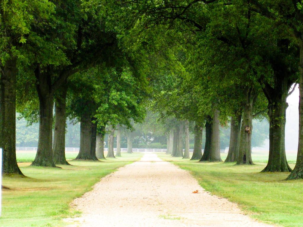 Tree Lined Drive, Dale Farm - Bridgeville Delaware
