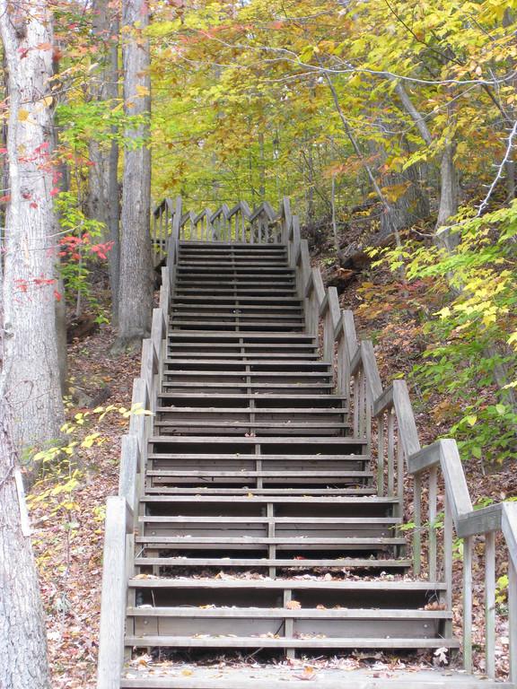 Stairway in the Woods - Great Falls Virginia