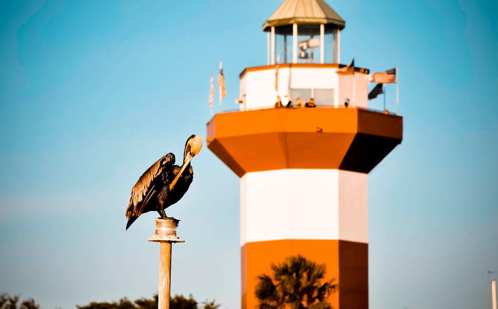 Perched pelican at Harbor Town - Hilton Head Island South Carolina