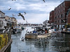 Gulls circling a fishing boat near the wharf.