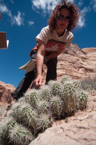 Colorado Plateau, 2014