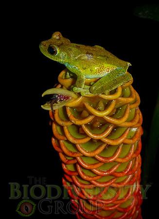 Biodiversity Group, P1060638
