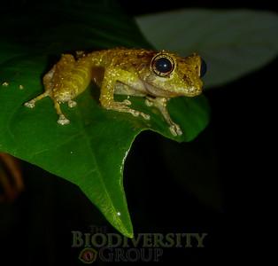 Biodiversity Group, P1020883