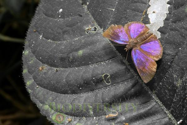 Biodiversity Group, 091013Virginia (4)