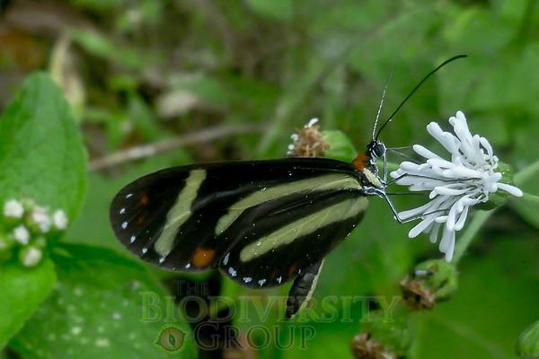 Biodiversity Group, P1000417