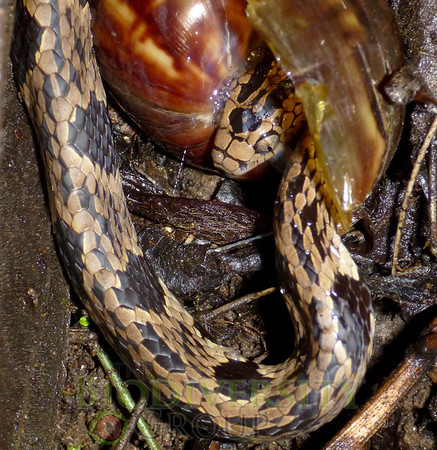 Biodiversity Group, P1040420