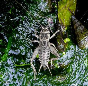 Biodiversity Group, 281112Lilibeth (27)