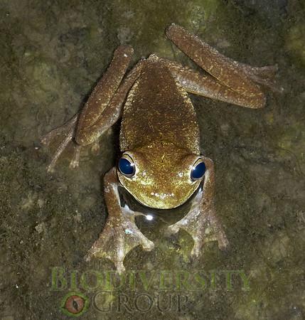 Biodiversity Group, 031012Ariana (5)
