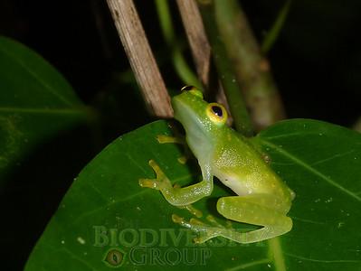 Biodiversity Group, 220513geo (33)