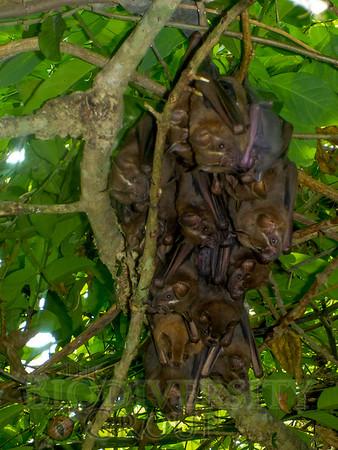 Biodiversity Group, P1080600