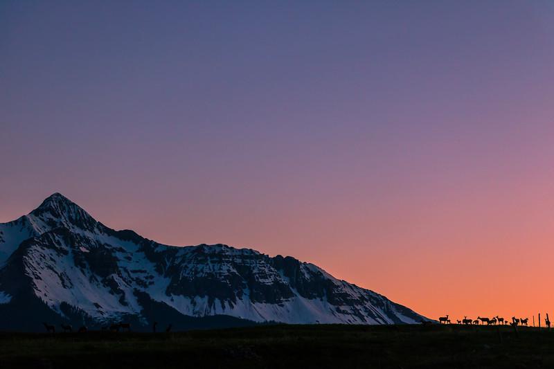 Elk Family Sunset, Telluride Colorado