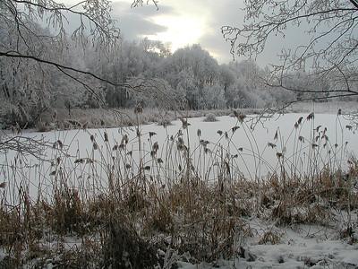 Dynodammen, vinter Linnesstranda, Lier 12.1.2002