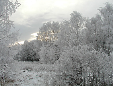 Rimkledd skog Linnesstranda, Lier 12.1.2002