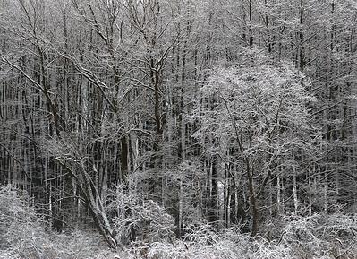 Tre mot skogkant (Duotone)