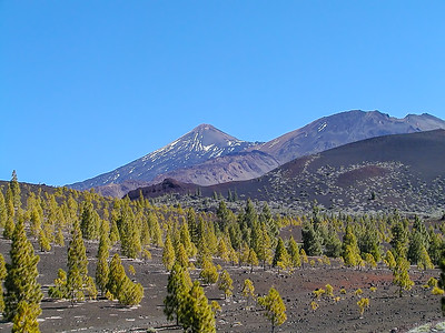 Skogen under Teide  Tenerife, Kanariøyene 21.2.2005 Canon EOS 20D + EF 50-105 mm