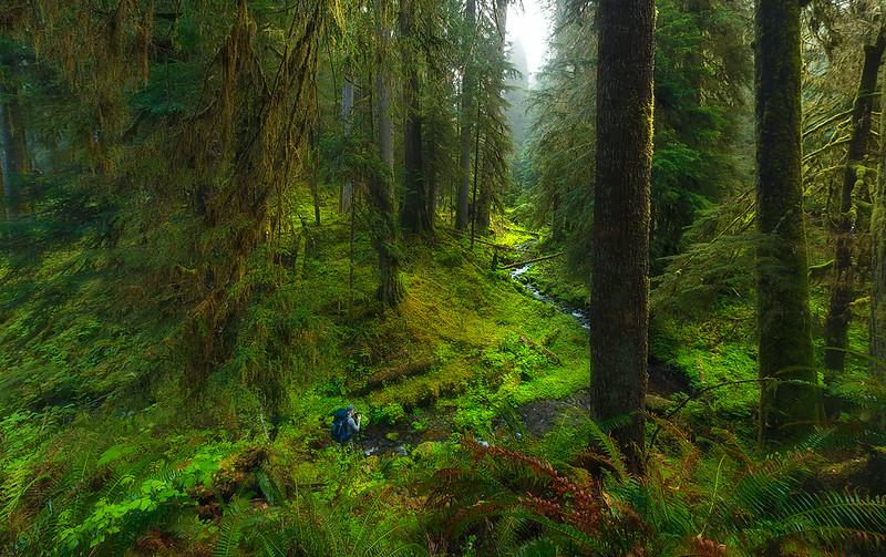 Exploring the Quinault Rain Forest