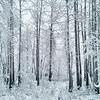 Fresh Snow in Alaska