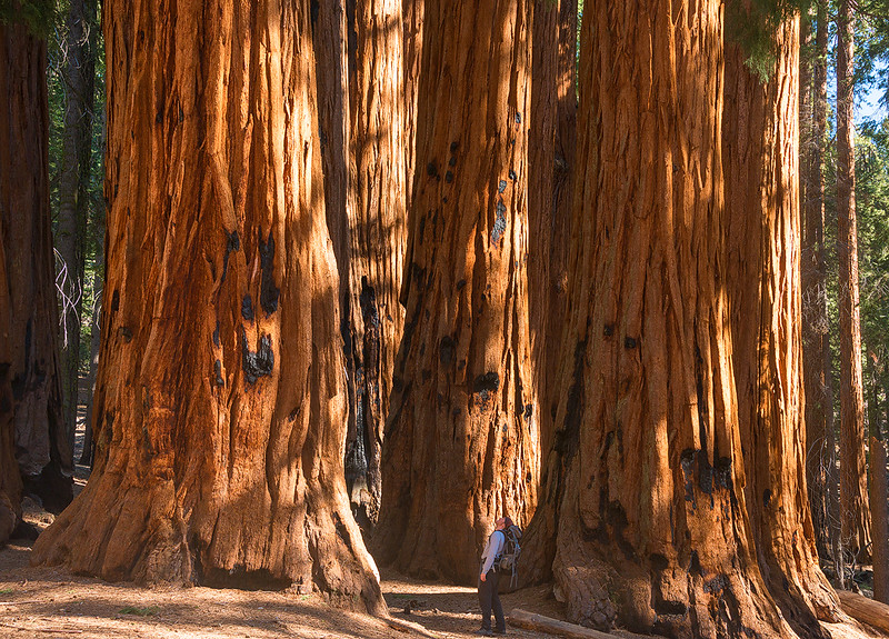 Exploring Sequoia National Park, California - May 2015