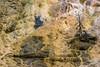 yellowstoneNP_9979