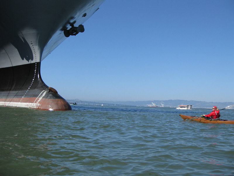 June 26th - Kimbo kayaking past a seal sunbathing on a cargo ship en route to a Giants Game.