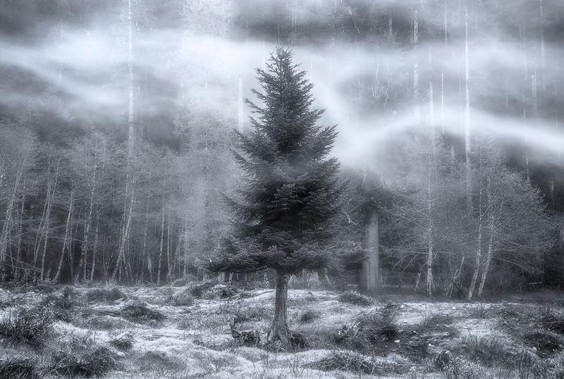 Enchanted - Quinault Rain Forest, Washington