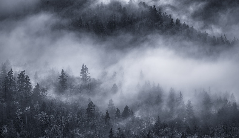 Fog in the Skagit River Valley - Washington State