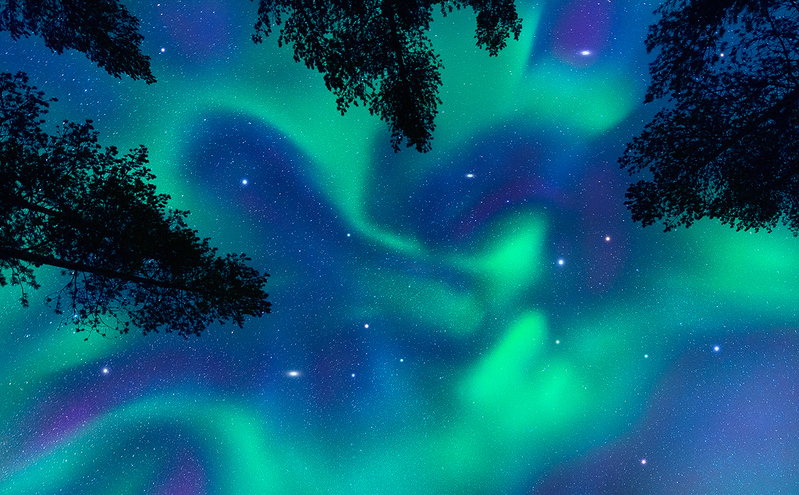 Sól's Tempest - The Pine Forests of Norway