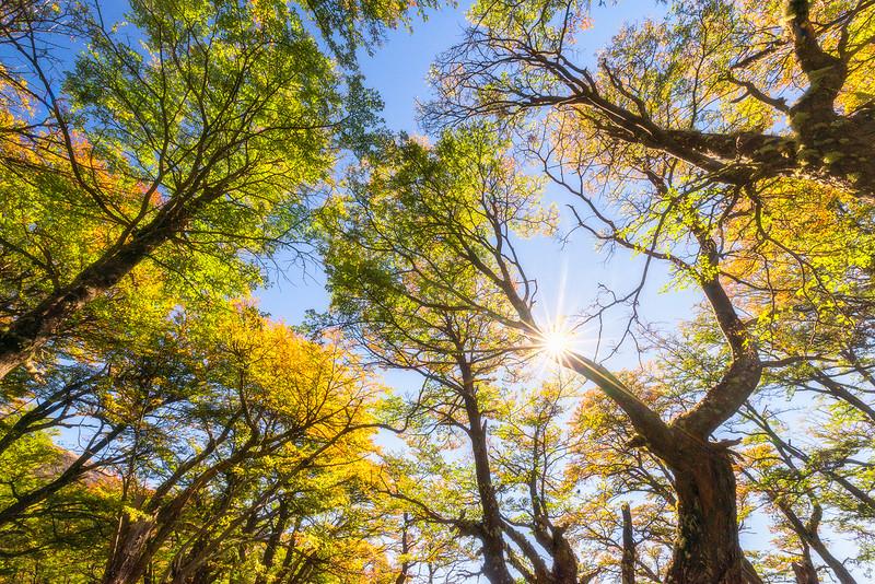 Autumn in the Andes  - Parque Nacional Los Glaciares, Patagonia,  Argentina