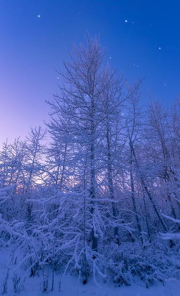 Arctic Dawn - Fairbanks, Alaska