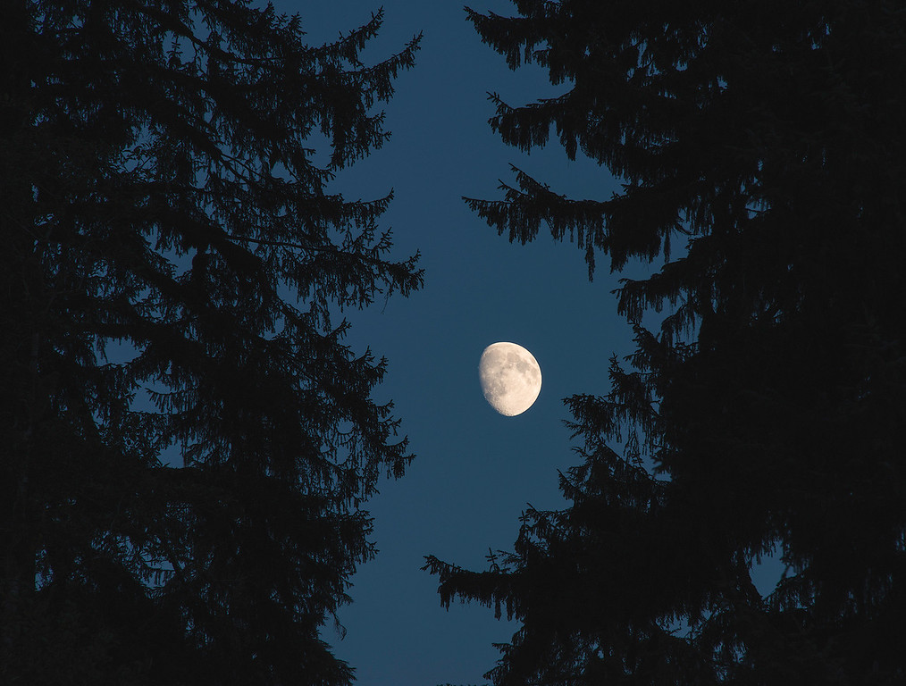 Moonset Deep in the Queets Rainforest