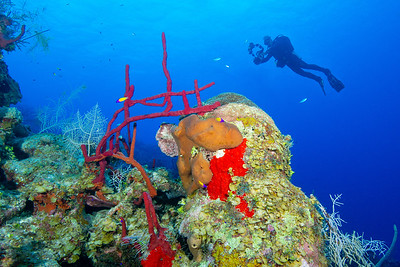 Don photographs the beautiful rope sponges at Round Rock.  Grand Cayman