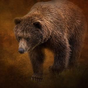 Brown Bear  Alaska Wildlife Conservation Center  Portage, Alaska