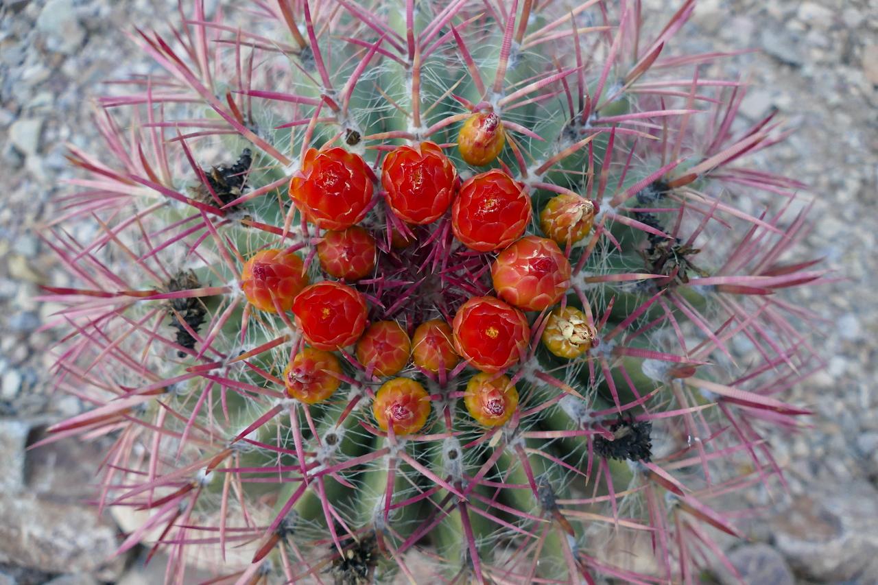 Desert blooms, Tuscon, Arizona