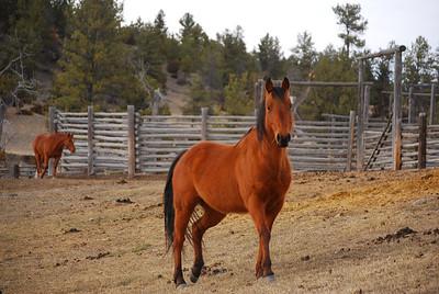 Tie Hack Lk, Buffalo WY & Twin Crrek Ranch, Big Timber MT 025