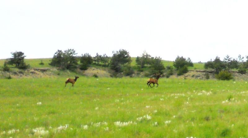 Weed spraying at Ranch 043