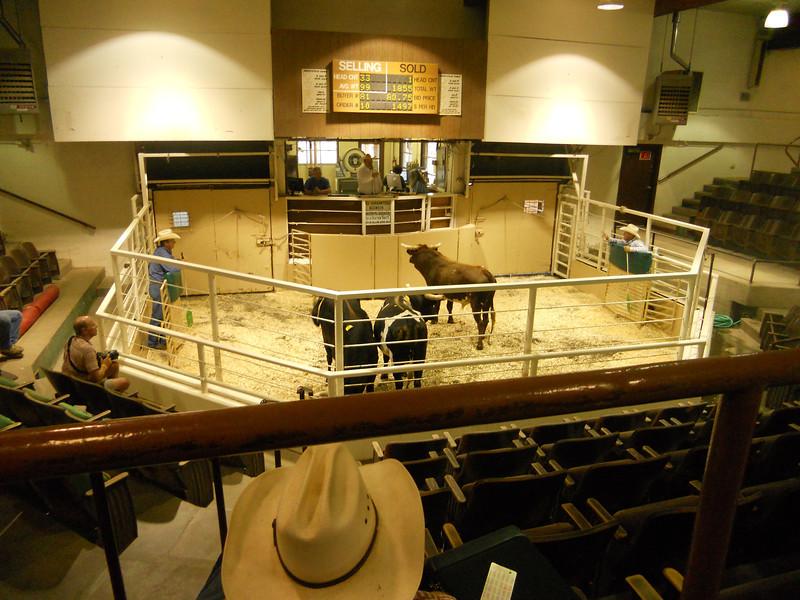 Bull Sale 9-7-11 010