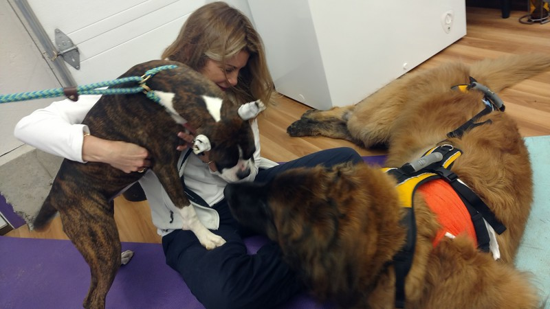Day two of physical therapy at the wonderful Wizard of Paws and still more new friends.