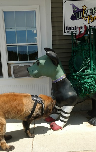 Today we're back at The Wizard of Paws and look who's guarding the entrance!