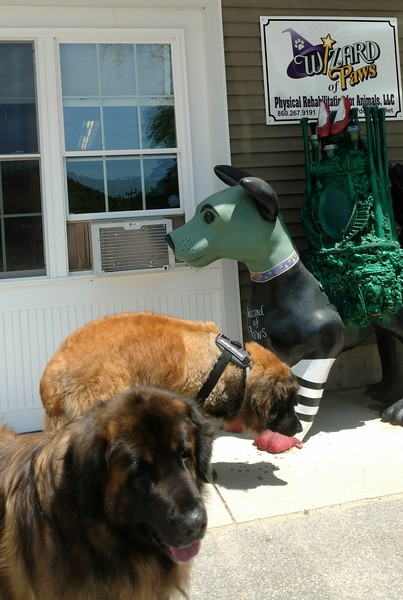 """Yulee says, """"I've never met a green dog before, that's neat.  And I reply, """"but he's got smelly feet."""""""