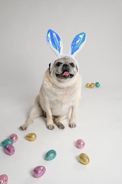 4475-EasterPugs-009