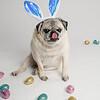4475-EasterPugs-004
