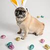 4475-EasterPugs-001
