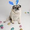4475-EasterPugs-005